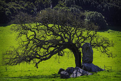 Oak Tree And Rock Poster by Garry Gay