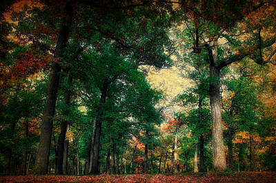 October In The Forest Textured 02 Poster by Thomas Woolworth