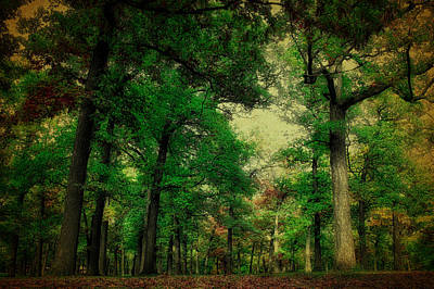 October In The Forest Textured Poster by Thomas Woolworth