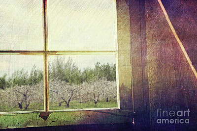Old Window Looking Out To Apple Orchard Poster by Sandra Cunningham
