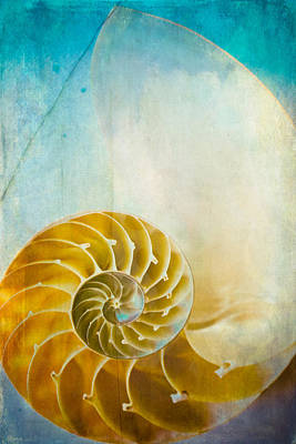 Old World Treasures - Nautilus Poster by Colleen Kammerer
