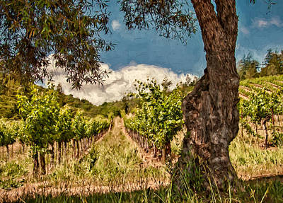 Olive Tree And Vineyard Poster by John K Woodruff