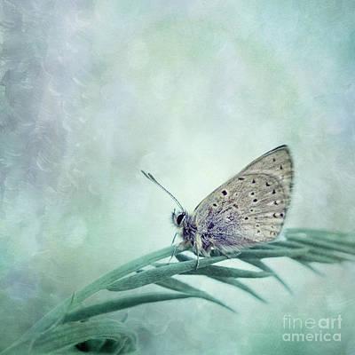 Once In A Blue Moon Poster by Priska Wettstein