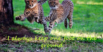 One Foot On  The Ground Poster by Miroslava Jurcik