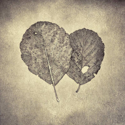 One Leaf Two Leaf Poster by Scott Norris