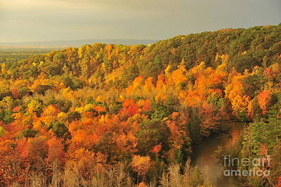 Orange Autumn At The Manistee River Poster by Terri Gostola
