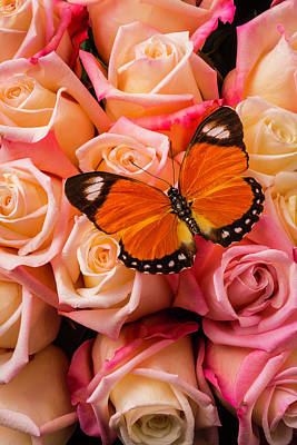 Orange Butterfly On Pink Roses Poster by Garry Gay