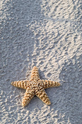 Orange Seastar Laying On Sand Poster by Mary Van de Ven - Printscapes