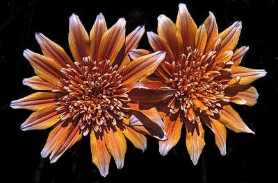 Orange South African Flowers Poster by Morris Finkelstein
