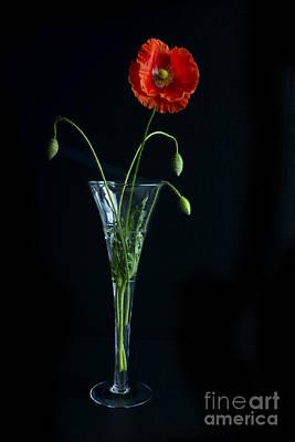 Oriental Poppy Poster by Elena Nosyreva