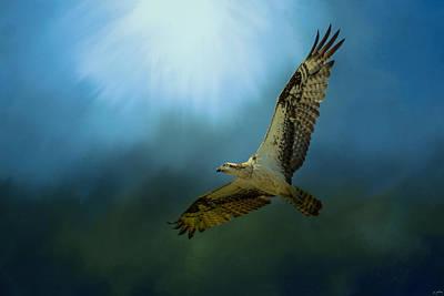 Osprey In The Evening Light Poster by Jai Johnson