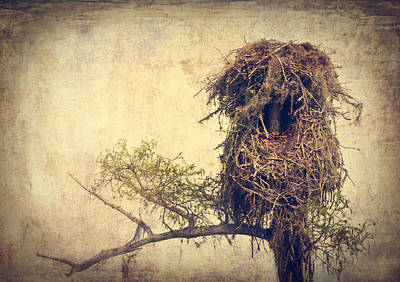 Osprey Nest Poster by Debra Forand