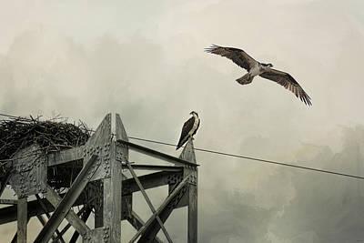 Ospreys At Pickwick Poster by Jai Johnson