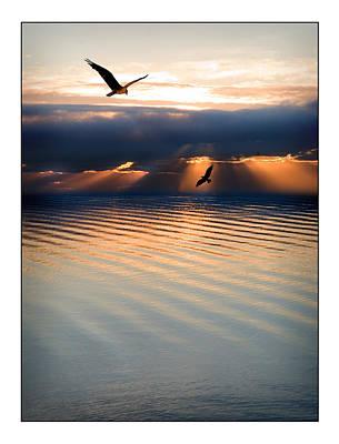 Ospreys Poster by Mal Bray