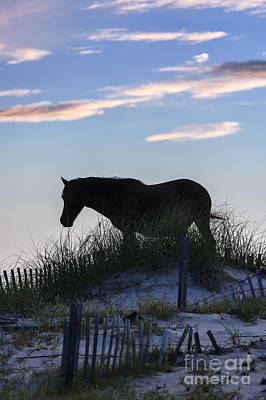 Outer Banks Mustang Poster by John Greim