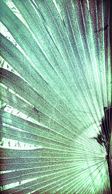 Palm Frond-lh Poster by Marvin Spates