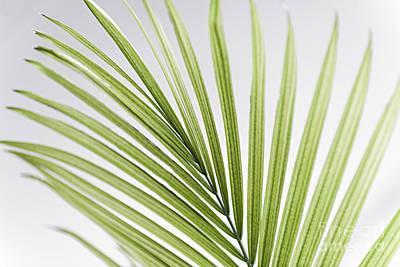 Palm Leaf Poster by Elena Elisseeva