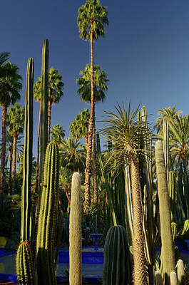 Palm Trees And Cacti With Blue Fountain At Majorelle Garden In M Poster by Reimar Gaertner