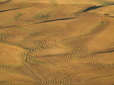 Palouse Tracks Poster by Jean Noren