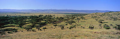 Panoramic Landscape Of Lewa Poster by Panoramic Images