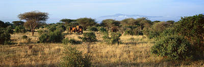 Panoramic View Of African Elephants Poster by Panoramic Images