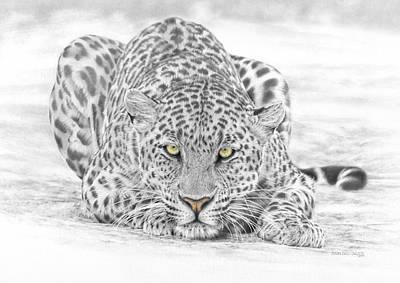 Panthera Pardus - Leopard Poster by Steven Paul Carlson
