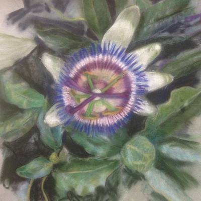 Passionflower Poster by Kathryn Lewis
