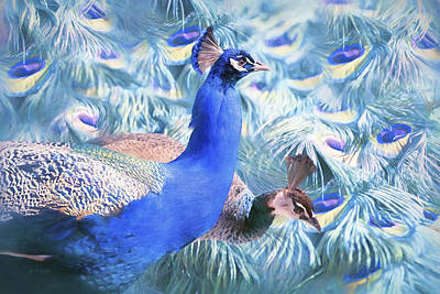 Peafowl Poster by Barbara Hymer