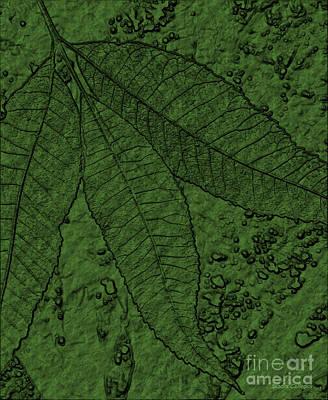 Pecan Tree Leaves Poster by Sandra Gallegos