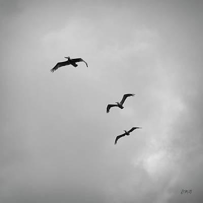 Pelicans In Flight I Bw Poster by David Gordon