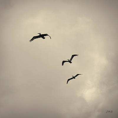 Pelicans In Flight I Toned Poster by David Gordon