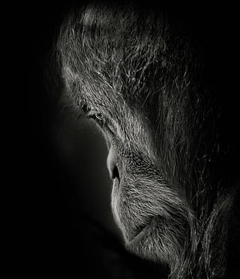 Pensive Poster by Animus Photography