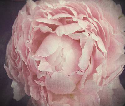 Peony Flower Poster by Marianna Mills