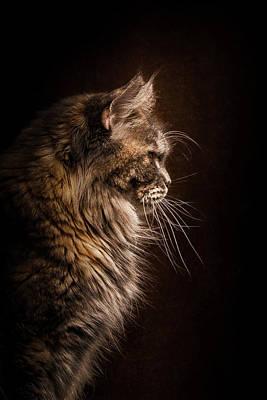 Perfect Profile Poster by Robert Sijka