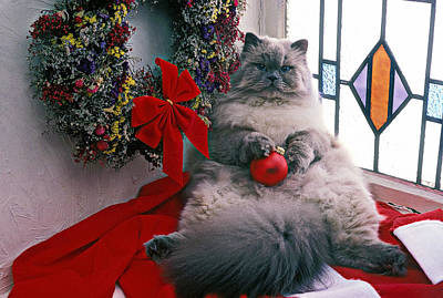 Persian Cat With Christmas Ball Poster by Garry Gay