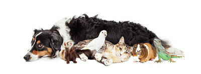 Pets Together On White Banner Poster by Susan Schmitz