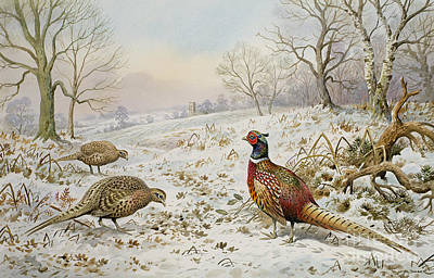 Pheasant And Partridges In A Snowy Landscape Poster by Carl Donner