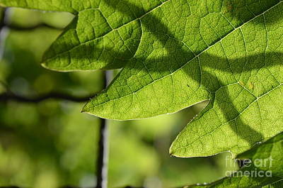 Photosynthesis 2 Poster by Eva Maria Nova