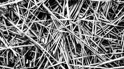 Pine Needles Abstract Poster by Keegan Hall