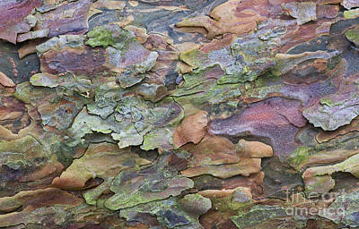 Pine Tree Bark Poster by Tim Gainey