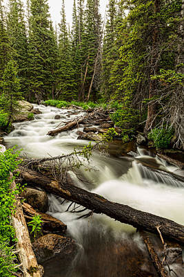 Pine Tree Forest Creek Portrait Poster by James BO  Insogna