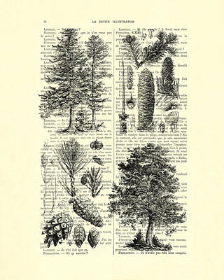 Pine Trees Study Black And White  Poster by Madame Memento