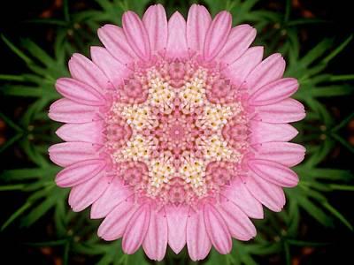 Pink Daisy Kaleidoscope Poster by Nancy Pauling
