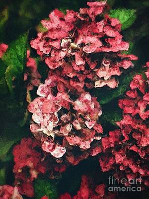 Pink Hydrangeas Poster by Amy Cicconi