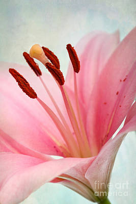 Pink Lily Poster by Nailia Schwarz