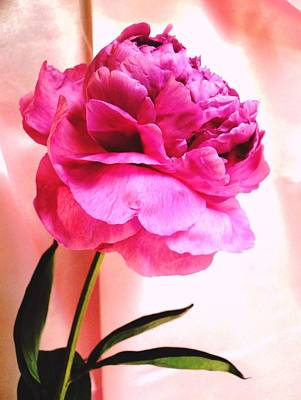 Pink Peony And Pink Satin Poster by Carol Reynolds