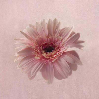 Pink Pink Pink Poster by Kim Hojnacki