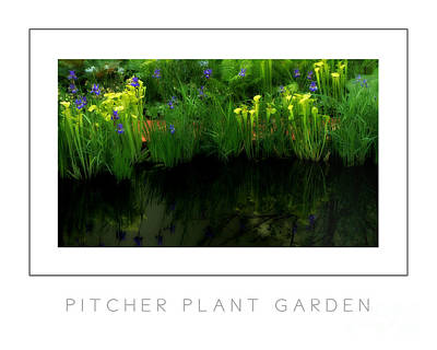 Pitcher Plant Garden Poster Poster by Mike Nellums