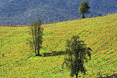 Planting A Vineyard Poster by Fernando Lopez Lago