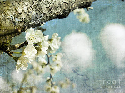 Plum Blossoms And Puffy Clouds Poster by Cindy Garber Iverson